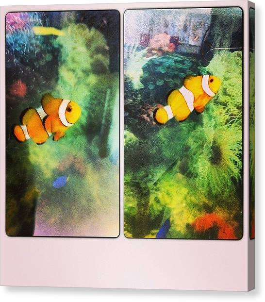 Fish Tanks Canvas Print - He Kept Moving 😔 #fish by Amber Baby