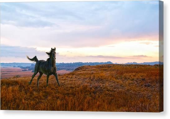 Black Stallion Canvas Print - He Runs Through My Dreams by Ron  McGinnis