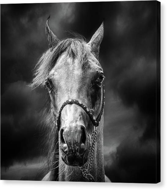 Abstract Horse Canvas Print - Head In The Clouds by Piet Flour