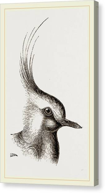 Lapwing Canvas Print - Head Of Lapwing by Litz Collection