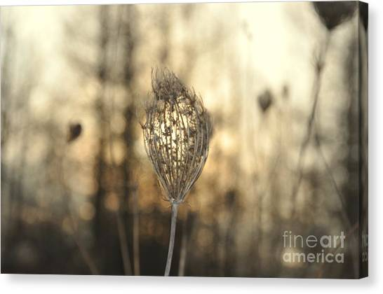 Head Of The Forest Canvas Print
