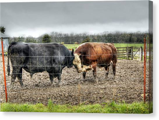 Head To Head Canvas Print