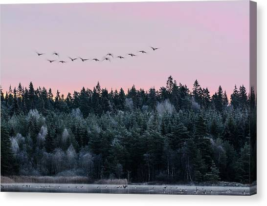 Sweden Canvas Print - Heading South by Bjorn Emanuelson