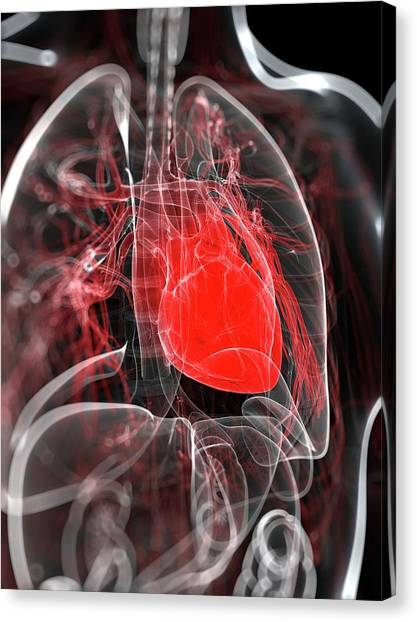 Heart Anatomy, Artwork Canvas Print by Sciepro