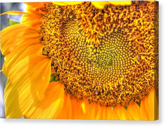 Heart-felt Sunflower Canvas Print