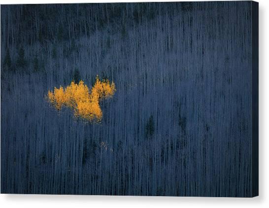 Colorado Canvas Print - Heart Of Aspens by Michael Zheng