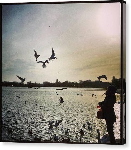 Water Birds Canvas Print - Heart Of Birds by Marian Farkas