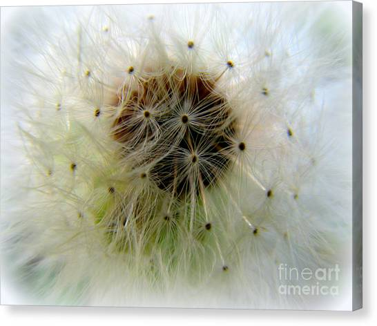 Heart Of The Dandilion Canvas Print