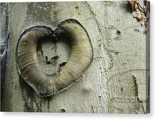 Heart Of The Forest Canvas Print