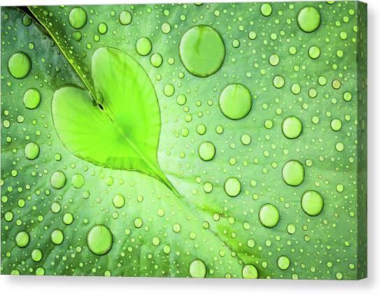 Drops Canvas Print - Heart by Patrick Foto