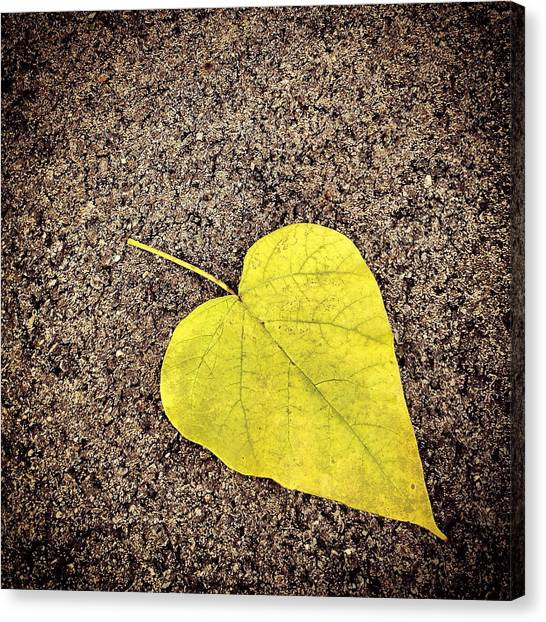 Heart Shaped Leaf On Pavement Canvas Print