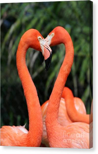 Heart To Heart Flamingo's Canvas Print