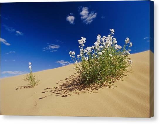 Hearty Wild Stock Wildflowers Growing Canvas Print by Jason Edwards