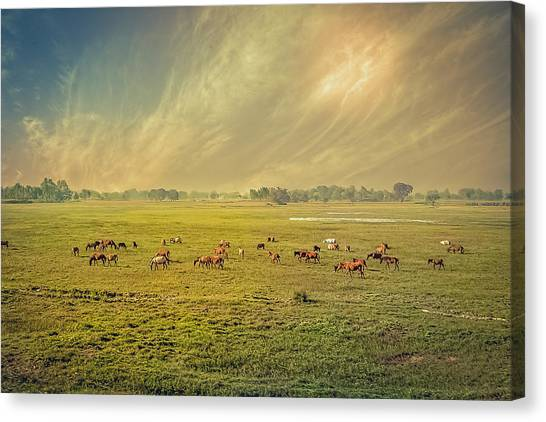 Heat N Dust - Indian Countryside Canvas Print
