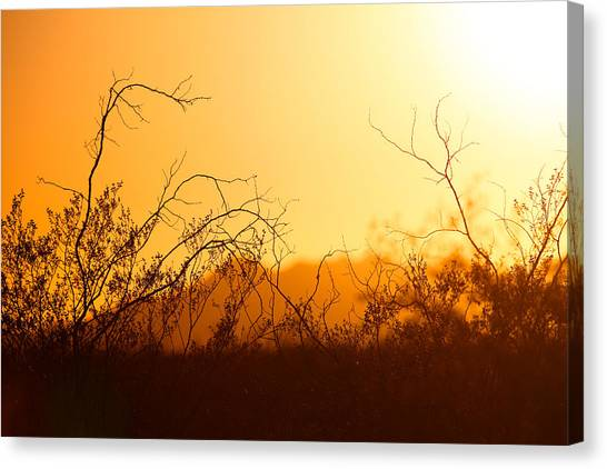 Heat Of The Day Canvas Print