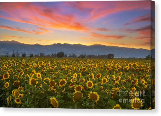 Heaven Canvas Print