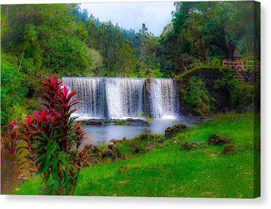 Heaven In The Woods Canvas Print