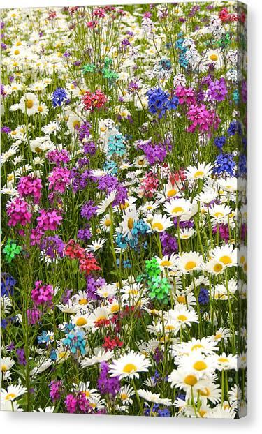 Heavenly Flowers 2 Canvas Print