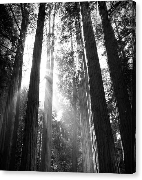 Heavenly Forest Canvas Print