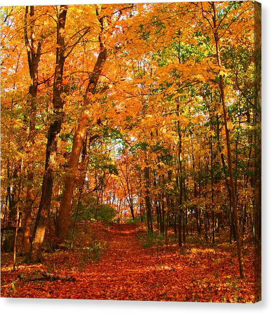 Heavenly Pathway Canvas Print by James Hammen