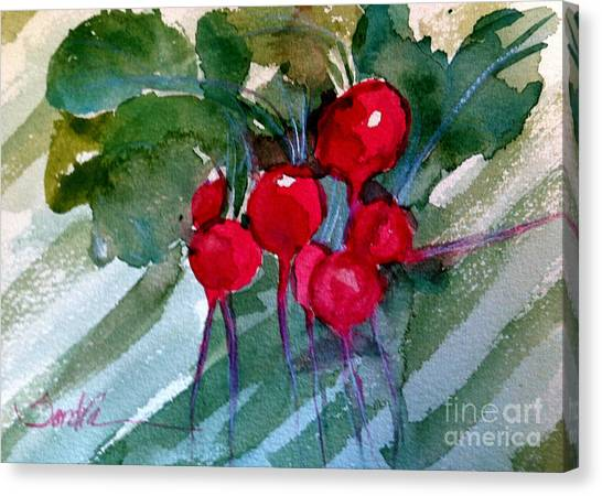 Heirloom Radishes Canvas Print by Sandra Stone