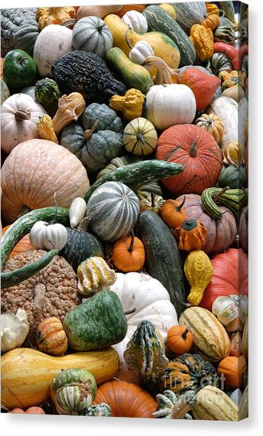 Heirloom Squash Tower V. Canvas Print by Vinnie Oakes