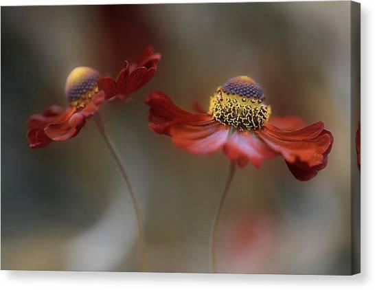 Summer Flowers Canvas Print - Helenium Dance by Mandy Disher