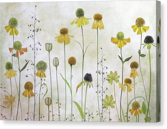 Summer Flowers Canvas Print - Helenium by Mandy Disher