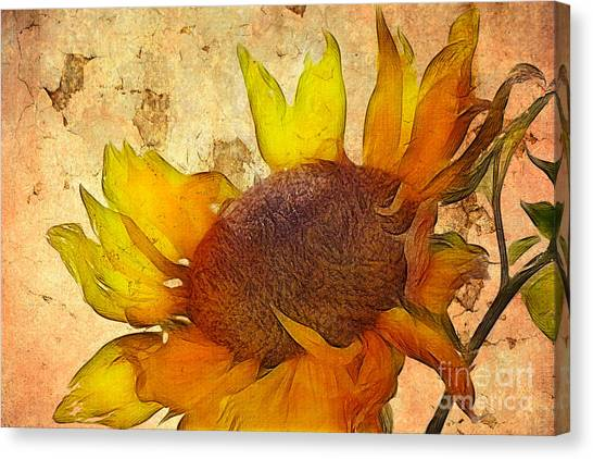 Sunflowers Canvas Print - Helianthus by John Edwards