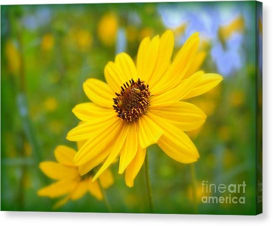 Helianthus Canvas Print