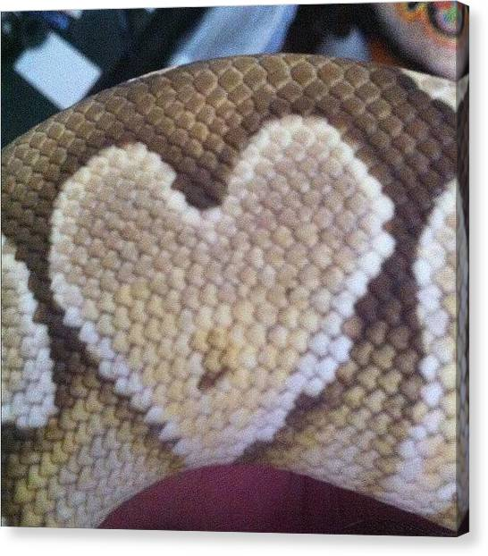 Pythons Canvas Print - Helius's Heart! ❤ #lesserballpython by Nicole Jones