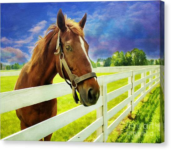 Horse Farms Canvas Print - Hello From The Bluegrass State by Darren Fisher