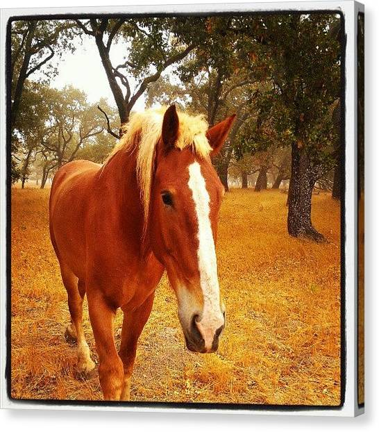 Head Canvas Print - Hello Horse by CML Brown