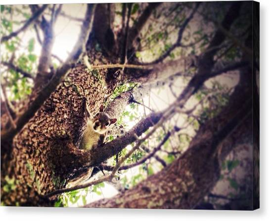 Squirrels Canvas Print - Hello by Leena Ascencio