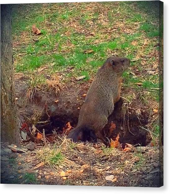 Groundhogs Canvas Print - Hello Little #groundhog ! by Jessica Frech