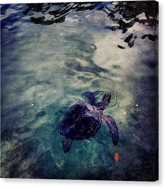 Sea Turtles Canvas Print - Hello Mr. Turtle by Terrence Jeffrey Santos
