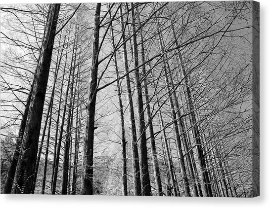 Hello Trees Canvas Print by Phoresto Kim