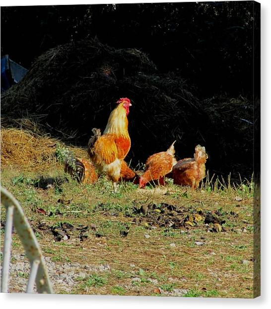 Henry And His Girls Canvas Print by Carol Hoffman