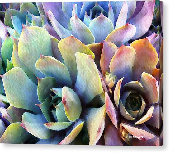 Cactus Canvas Print - Hens And Chicks Series - Soft Tints by Moon Stumpp