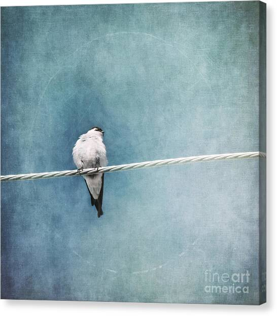 Swallow Canvas Print - Herald Of Spring by Priska Wettstein