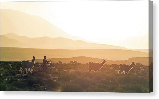 Scenic Canvas Print - Herd Of Llamas Lama Glama In A Desert by Panoramic Images