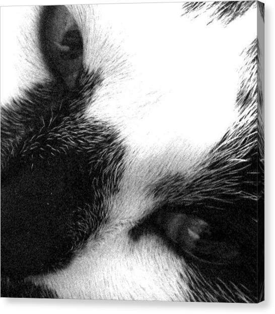 Tuxedo Canvas Print - Here Kitty by Stephen Cooper