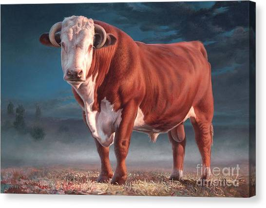 Cow Farms Canvas Print - Hereford Bull by Hans Droog