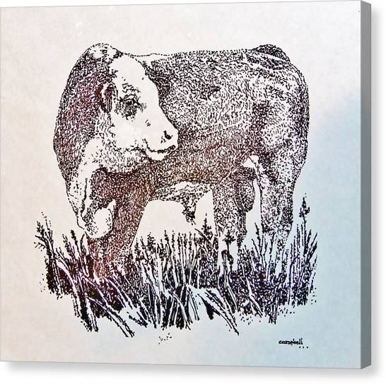 Polled Hereford Bull  Canvas Print
