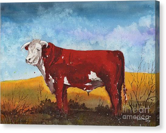 Hereford Bull Canvas Print