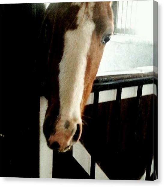 Horse Farms Canvas Print - Here's Looking At You On A Beautiful by Vandal Vox