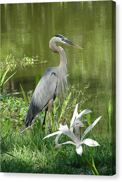 Heron And Swamp Lily Canvas Print