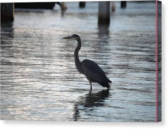 Water Birds Canvas Print - Heron At Dusk by Doug Grey