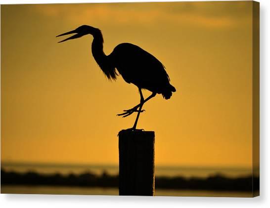 Heron At Sunrise Canvas Print