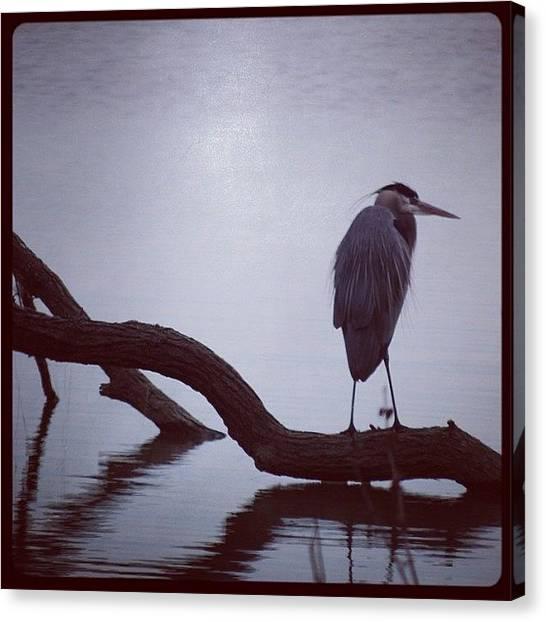 Herons Canvas Print - #heron #greatblueheron #birds by Robb Needham